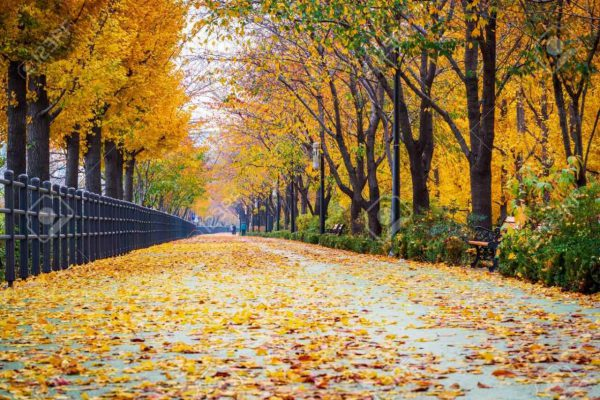 Tour mùa Thu Hàn Quốc: Seoul - Nami - Everland (tháng 10, 11 - bay Vietnam Airlines) (Sao chép)