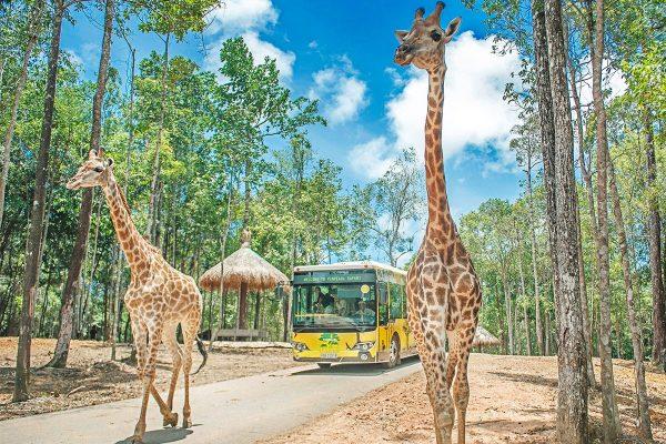 vinpearl safari phu quoc (1)